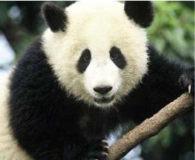 Junk-Me-Panda